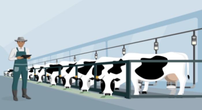 Milking Parlour Pit Mats Vector